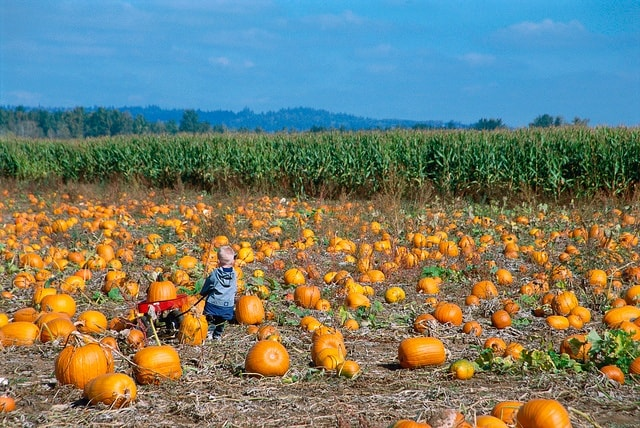 Fall Festivals on Long Island