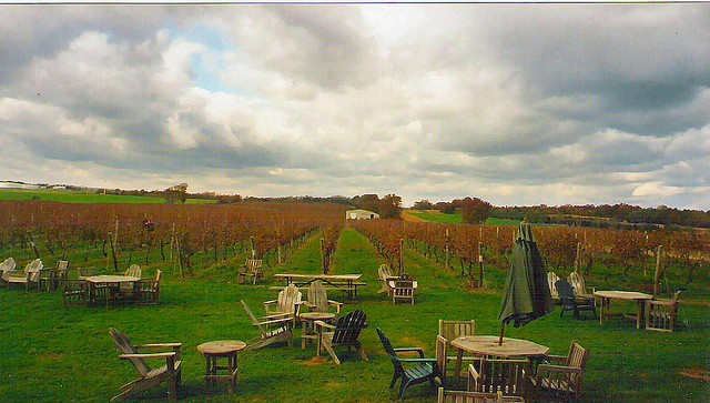 Long Island Wine Tour